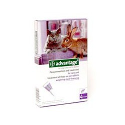 Advantage 80 All 1x4x0.8ml