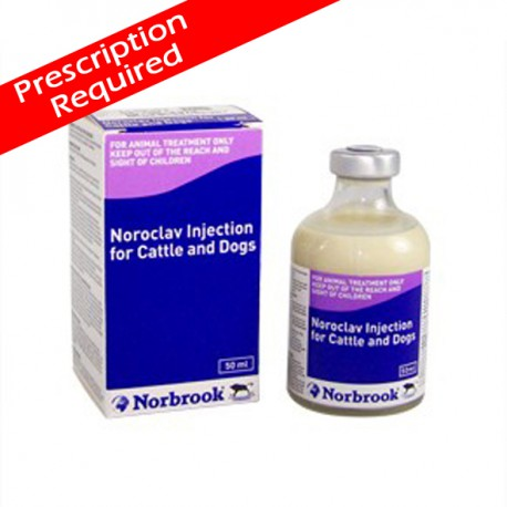Noroclav Injection