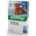 Advantage 400 Dogs 1x4